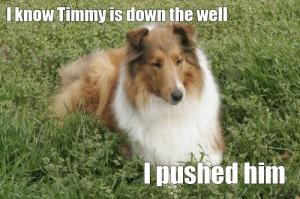 timmy_lassie